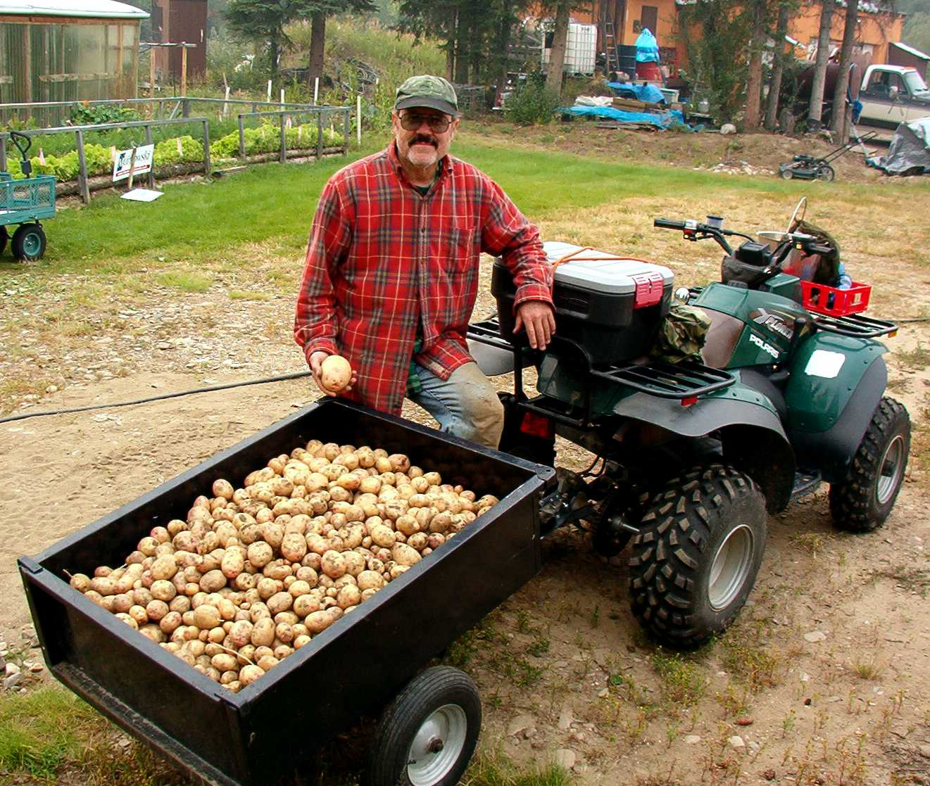 Freshly harvested potatoes or spuds for some